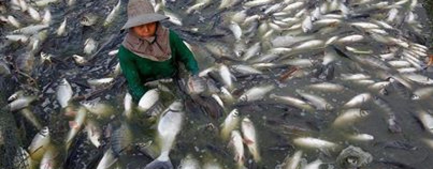 Beware, Tilapia Imported From China Is Raised On Feces!  You Gotta Read How The FDA Defends Letting Americans Consume This!