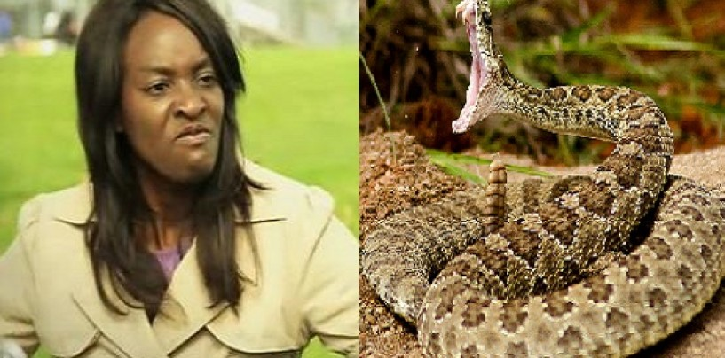 Approaching A Rattlesnake Is A More Pleasant Experience Than Approaching The Average Black Woman!