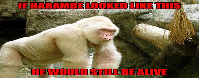 Black Lives Matter Says Cincinnati Gorilla Shooting Racist! Hilarious Phone Call! (Video)