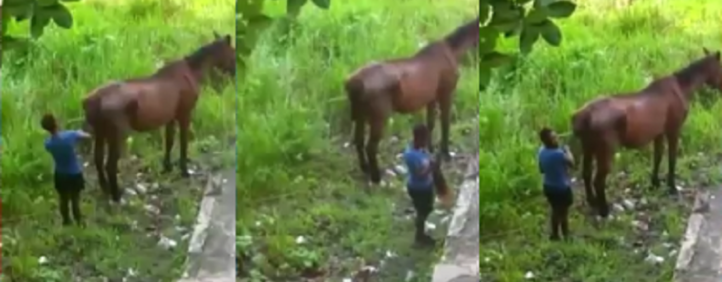 The Moment The World Saw A Black Woman Shave A Horse's Tail To Wear Its Hair! #iShitUNot (Video)