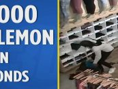 A Band Of Black Hoes Sought For Robbing 10s Of Thousands Of Dollars Of Lululemons Across The Bay Area! (Video)