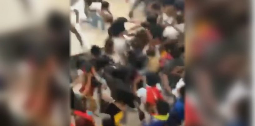 Niggly Bears Fight In Desoto Texas School Over Some Stank Ratchet! Same As It Ever Was! (Video)