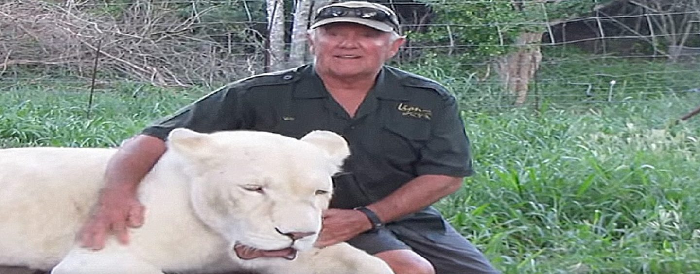 White Man Finds Out The Hard Way That These White Tigers Are Not His Friend! (Video)